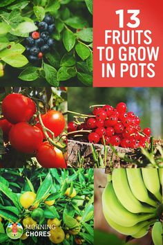 13 Best Fruits and Berries to Grow in Container Garden
