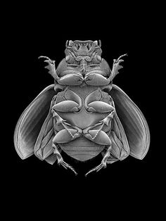 Giles Revell, Photographer · Projects · Insects