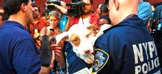 ASPCA Rescues 50 Dogs in Bronx Dog Fighting Case