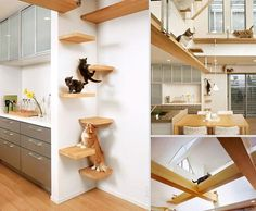 Cat Room Design Ideas decorationsmodern frigidaire chest freezer laundry room with built in cat bed ideas modern frigidaire Here Are 25 Cat Furniture Ideas That Will Blend With Your House Interior And You Will Find The Best Way To Love Pets Cat House Plans, Cat Tree Plans, Pet Furniture, Furniture Design, Furniture Ideas, Friends Furniture, Space Furniture, Dream Furniture, Cool Cat Trees