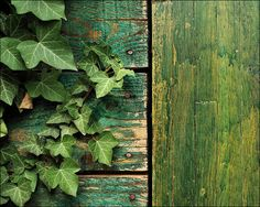 g r e e n by Prym*, via Flickr