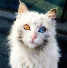 Images Un chat aux yeux magnifiques Images drôles Photos Divers ...