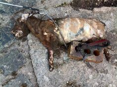a psychological test should be demanded upon any potential pet owner and please do not rehome a pet unless you know the person well this is what a poor sweet dog looked like after rehoming him with a psychotic scumbag .  pets are not things they feel