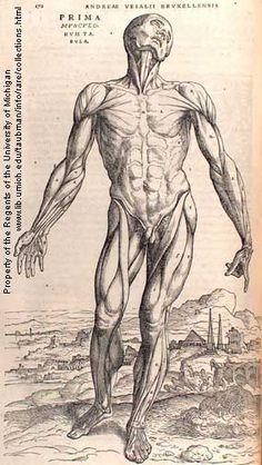 vesalius (1542)