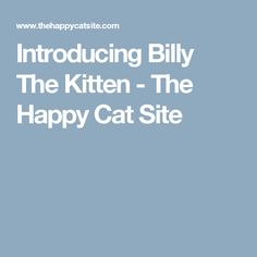 Introducing Billy The Kitten - The Happy Cat Site