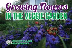Golden Plains Greenhouse - Companion Planting with Flowers in the Veggie Garden Growing Flowers, Planting Flowers, Companion Planting, Veggies, Garden, Plants, Vegetable Recipes, Garten, Vegetables