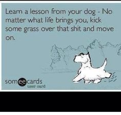 Dog Humor:  Learn a lesson from your dog.  No matter what life brings you, kick some grass over that shit and move on.