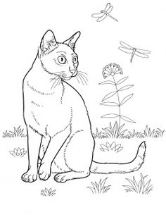 cat color pages printable   Bombay Cat coloring page   Super Coloring
