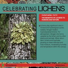 Lichens are an important part of the forest's ecology. Why not thank them for their part next time you Teaching Science, Life Science, Discover The Forest, Nitrogen Fixation, Gain Followers, Forest Service, Great Life, Middle School Science, Make It Work