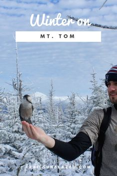 Tom - New Hampshire: Not one of the taller or more challenging footer in NH, but the gray jays on the summit of Mt. Tom are always entertaining. A beautiful hike in the winter. New Hampshire, Tom Winter, Gray Jay, Winter Hiking, Adventure Activities, Camping, Best Hikes, Hiking Trails, Trekking