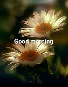 you are searching for good morning beautiful massages. The best image is available on this website to wish you good morning. Sunday Morning Wishes, Good Morning Happy Sunday, Good Morning Funny, Good Morning Greetings, Good Morning Good Night, Morning Messages, Good Morning Images Flowers, Latest Good Morning Images, Good Morning Beautiful Images