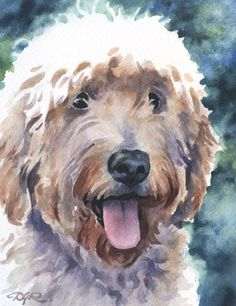 GOLDENDOODLE Dog Watercolor Signed Fine Art Print by Artist DJ Rogers by k9artgallery on Etsy https://www.etsy.com/listing/195372415/goldendoodle-dog-watercolor-signed-fine