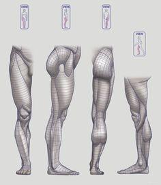 Anatomy Drawing Anatomy Next - Anatomy of Lower limb: Block-outs Human Muscle Anatomy, Human Anatomy Drawing, Human Figure Drawing, 3d Anatomy Model, Human Anatomy For Artists, Body Reference Drawing, Anatomy Reference, Art Reference Poses, Leg Anatomy