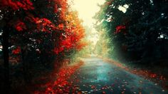 Road through red forest wallpaper