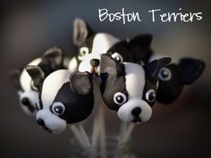 Boston Terrier cake pops!
