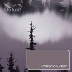 Feel inspired by this soothing heather skyscape. Where would you paint Palladian Plum? Wall Colors, Paint Colors, Colours, Dulux Paint, Colour Schemes, Color Inspiration, The Darkest, Plum, Home Improvement