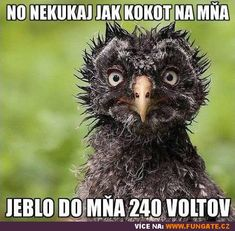 No nekoukej jak kok*t na mě Good Morning Good Night, Good Morning Quotes, Happy Everything, Happy Wishes, Quote Posters, Animals And Pets, Funny Jokes, Laughter, Lol