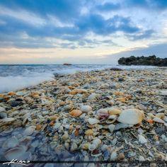 Coral Cove Park Shells Jupiter Island