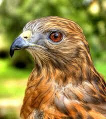 Schevahn's eyes are a shade or two brighter than this, in pitch black feathers.