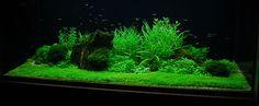 Aquascape with Utricularia graminifolia by Extraplant, via Flickr