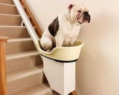 Dog Elevator For Your Home? It looks like the dog would have to jump up a flight just to get in the thing... Not so much cool as interesting.