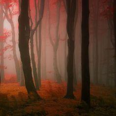 photos-de-forets-d-automne-de-Janek-Sedlar-4