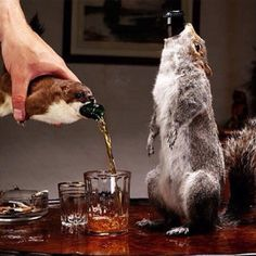 "For those who have a love for taxidermy AND beer, here's just the thing for you. Fancy Scottish brewery BrewDog has just released a ABV ""The End of History"" beer which will be sold inside roadkill (your choice:a stuffed stoat or gray squirrel). Dead Squirrel, Unique Business Ideas, Malbec, Beer Packaging, Packaging Design, Retail Packaging, Label Design, Graphic Design, Bottle Cover"