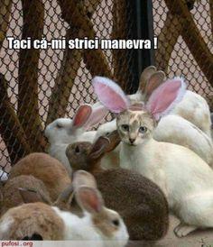 pisica printre iepuri (www.pufosi.org)
