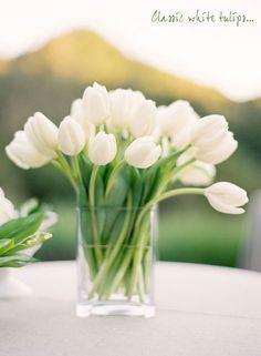 Simple and elegant white tulips.