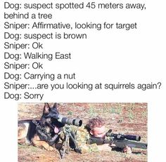 Sniper dog