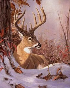 Linda Picken Art Studio / Buck Laying in Snow.jpg