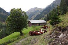 Zwischenziel Mandl-Heimalm Hiking, Adventure, Mountains, Nature, Travel, Walks, Naturaleza, Viajes, Adventure Game