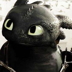 He's innocent! Poor Toothless!