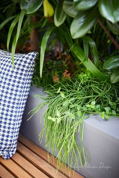 © Adam Robinson Design Sydney Outdoor Design and Styling Landscape Stanmore Project Backyard Garden Design, Small Backyard Landscaping, Small Garden Design, Modern Landscaping, Backyard Patio, Backyard Ideas, Next Garden, Side Garden, Lush Garden