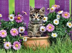 Purrfect Purple Flowers - Cats Wallpaper ID 2022071 - Desktop Nexus Animals
