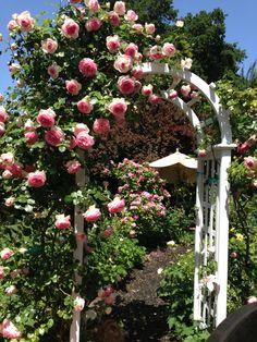 Acrilic Paintings, Climbing Roses, Flower Ideas, Climbers, Most Beautiful, Gardening, Create, Flowers, Nature