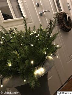 Altan och lite annat utomhus - Hemma hos Harmonica Christmas Wreaths, Christmas Tree, Advent, Holiday Decor, House, Home Decor, Ska, Pictures, Teal Christmas Tree