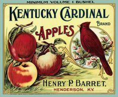 Kentucky Cardinal apples