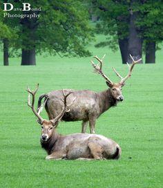 Taken in Woburn deer park