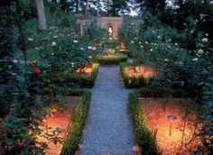 erdspieß-leuchten - allroundtalente für den garten. pflanzen, Garten und erstellen