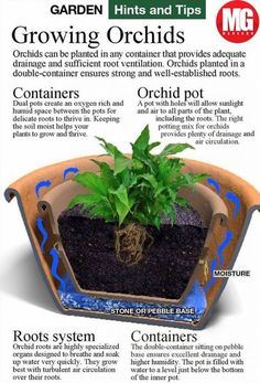 Top 10 Don'ts When Growing OrchidsYou can find Growing orchids and more on our website.Top 10 Don'ts When Growing Orchids Growing Plants, Garden Plants, Container Gardening, Flowers, Growing Orchids, Growing, Plants, Planting Flowers, Air Plants