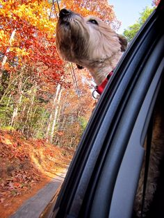 Roll the window down, put your nose in the wind and breathe.