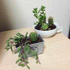 Succulent and cactus