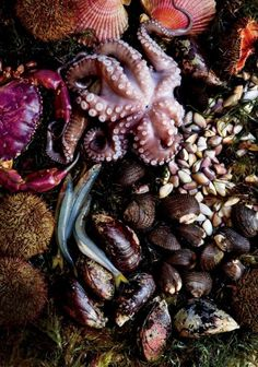 Superlative seafood, delivered off Peru's coast by the cold Humboldt Current, has long distinguished Peruvian cuisine; Incan emperors ate fresh fish carried to Cuzco by runners. This batch from the huge fish market in Lima's Villa María del Triunfo neighborhood was headed for La Mar restaurant.