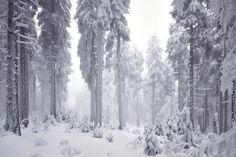 Magnifiche fotografie scattate nell'incantevole foresta bavarese.