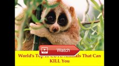 Worlds top CUTE Animals That Can KILL You  Welcome to TopArchive We all love adorable cute snuggly animals but sometimes those fluffy squishy creatures just dont love us back For this installment  on Pet Lovers