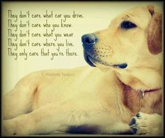 A dog is the only thing on this earth that loves you more than themselves !!! Josh Billings