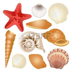Colorful set of seashells and red starfish