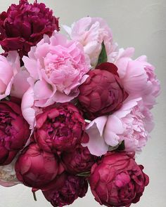 flowers peonies An armful of perfect peonies I picked up this morning from fleurametz_lon , not for a client, just for me, because I couldnt resist (as Rare Flowers, Flowers Nature, Pretty Flowers, Fresh Flowers, Piones Flowers, Colorful Roses, Exotic Flowers, Summer Flowers, Purple Flowers