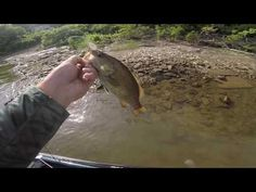Smallmouth Bass Fishing on the Ohio River - (More info on: https://1-W-W.COM/fishing/smallmouth-bass-fishing-on-the-ohio-river/)